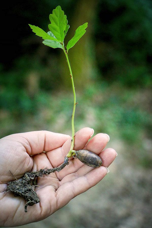 Produce Gardening