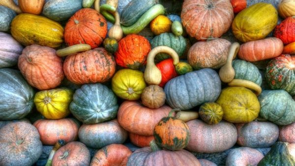 Overhead view of a variety of pumpkins and winter squash